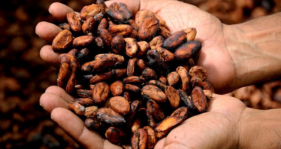 Ruke pune zrna kakaa - moja cokolada