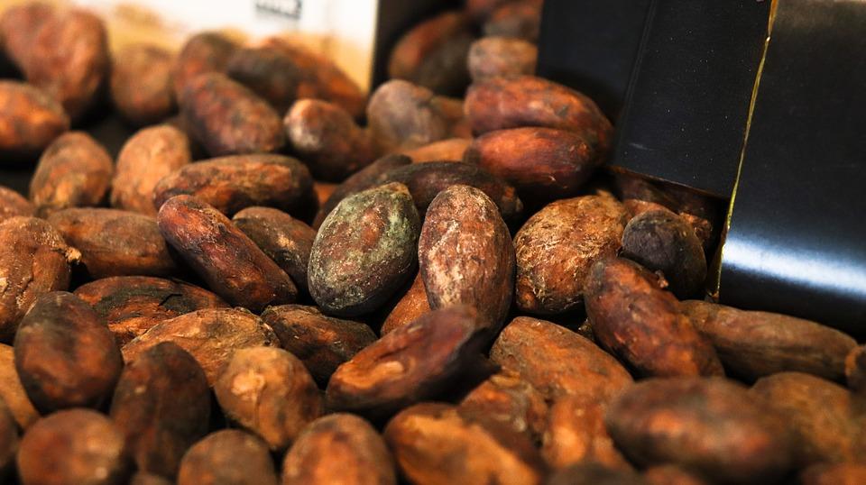 Zrna kakaoa