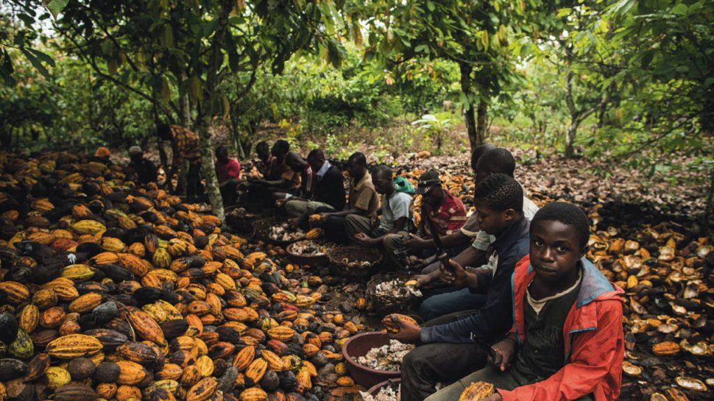 Deca rade na plantazi kakaovca