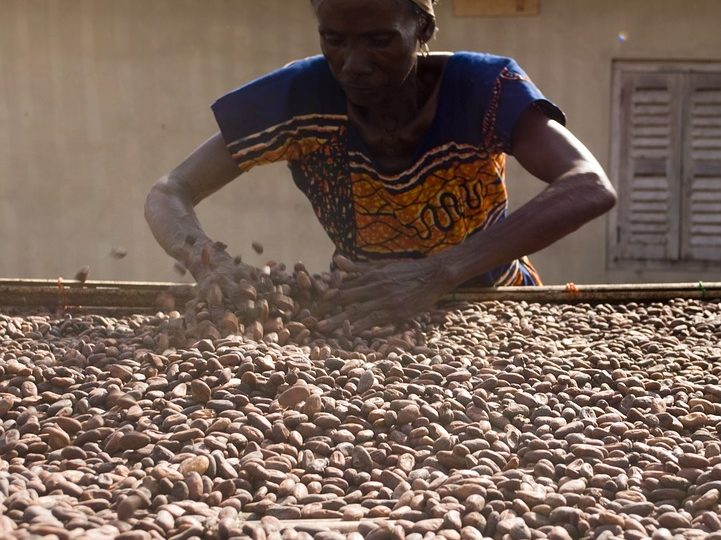Kakao obrada zrna kakaovca